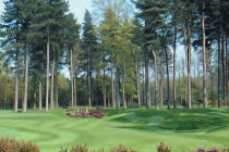 Forest Pines named as 'favourite course to play'