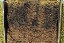 How to measure and reduce organic matter on greens