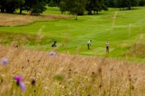 Why Temple Golf Club is a wildlife haven