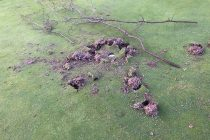 Another golf course suffers 'the worst vandalism we've seen'