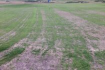 'Major disruption' to golf course after chemical applied 'in error'