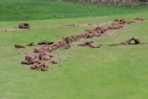 Golf club is vandalised just before it was due to reopen
