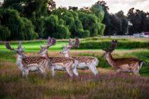 Meet the golf charity: Get Golfing