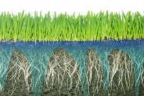 Managing water with soil surfactants