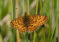 Golf club receives £91k grant to protect butterflies